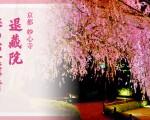 20春のweb画像